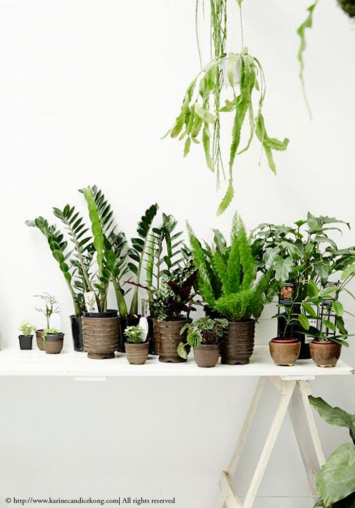 urban jungle at home. For more inspiration, go to www.karinecandicekong.com