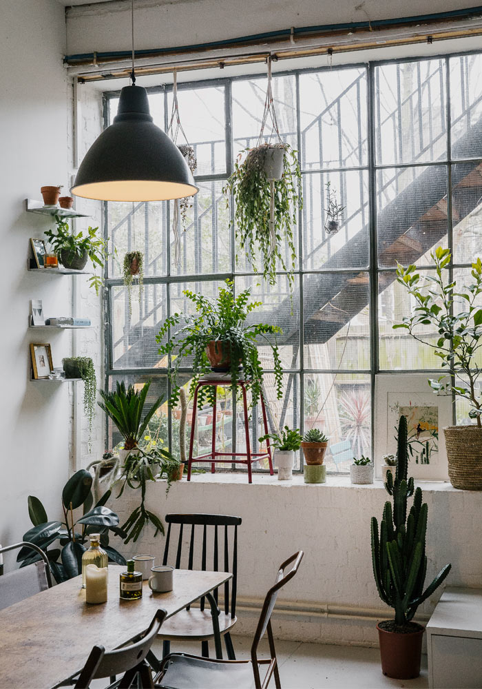 How to look after your plants